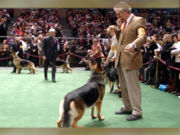 dogshow.png