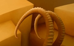 background_08-10_ibex_horns_tn.jpg